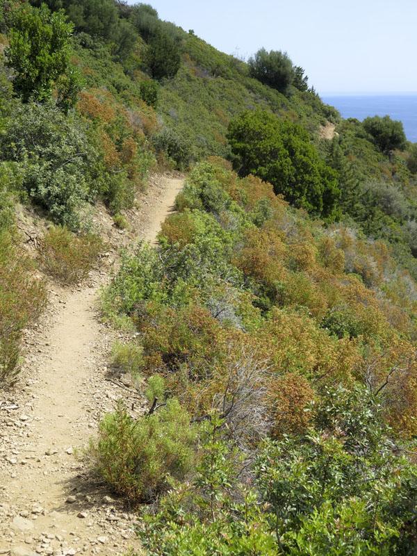 Weg zum Pedralonga