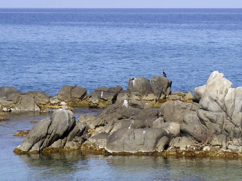 Kormoran am Strand von Torre di Bari