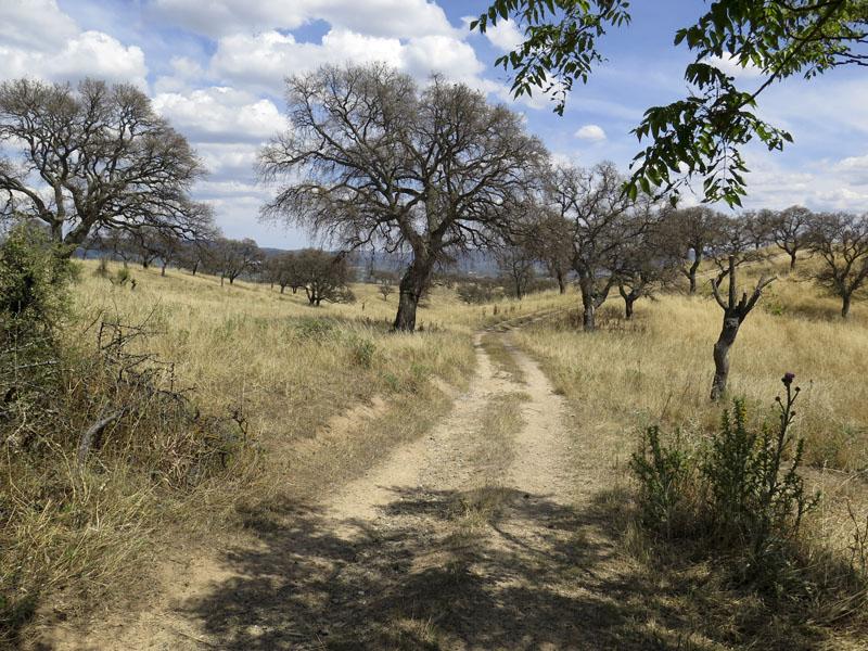 savannenartige Landschaft